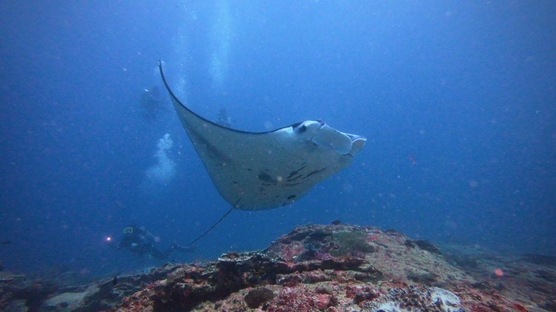 manta-point-diving