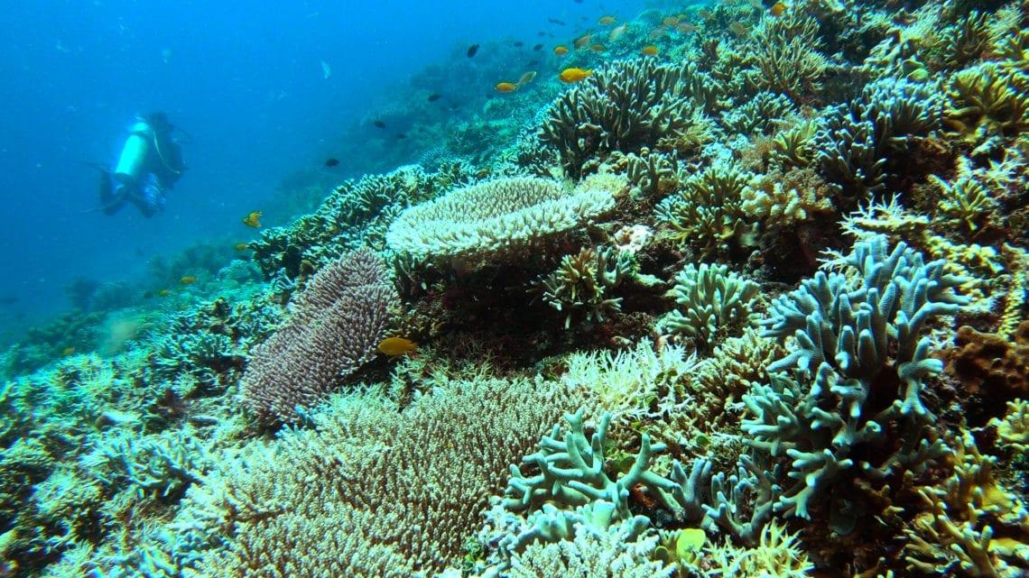scuba-diving-mansuar