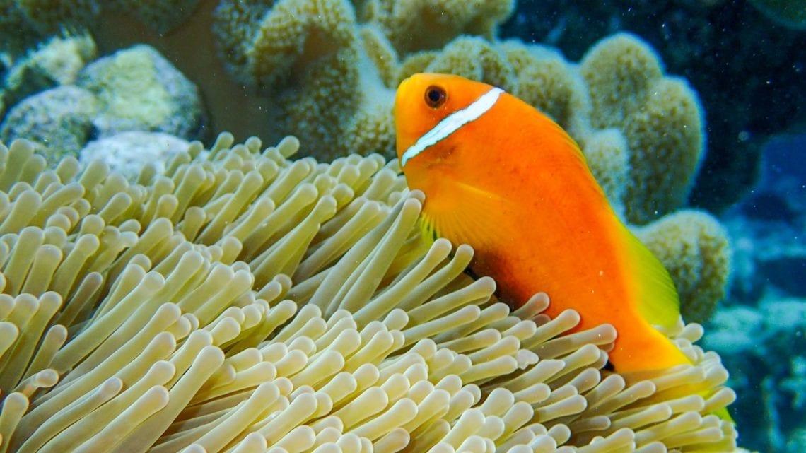 maldives-north-male