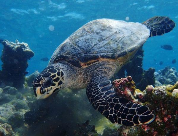 snorkeling trips maldives
